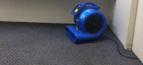 Drying fan for water damaged carpet